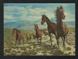 Horses Horse Animal 3 D Picture Postcard  Plastic View Card - Saudi Arabia