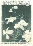 PIE18-Amb-2577 : CARTE PARFUMEE AU JASMIN DE LA VALLEE DU LOUP . GOURDON. ALPES MARITIMES. - Parfums & Beauté