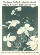 PIE18-Amb-2577 : CARTE PARFUMEE AU JASMIN DE LA VALLEE DU LOUP . GOURDON. ALPES MARITIMES. - Perfume & Beauty
