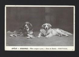 2 CAES SERRA Da ESTRELA - 2 Mountain Dogs SERRA DA ESTRELA Breed. Old Postcard (Guarda) Portugal 1910s - Guarda