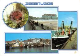 CPM - ZEEBRUGGE - Zeebrugge