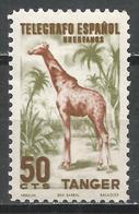 Tangier. #E (M) Telegrafo, Giraffe * - Télégraphe