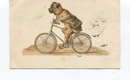 CPA En Relief - Illustrateur - CHIEN HUMANISE -  DOG ILLUSTRATEUR  - Bouledogue? Carlin? Cycliste - Circulée En 1901 - Chiens