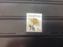Tsjechië / Czech Republic - Bloemen (2) 2011 - Tsjechië