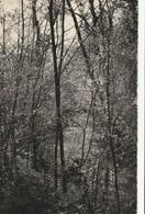 83/ Belgentier - Vallée Du Capeau N° 19 AB Editions - Francia