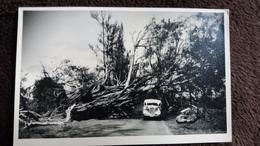 CPSM ILE MAURICE CYCLONE DE 1945 ED JEAN LOUIS CIRCULEE EN 1952 ARBRE ABATTU BUS CAR - Postcards