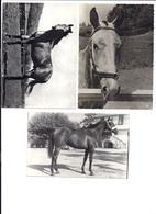 Set Di 3 Cartoline Di Cavalli - Cavalli