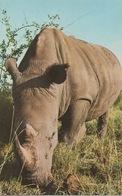 CPA ANIMAUX Rhinocéros En Gros Plan - Rhinocéros