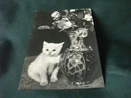 GATTO  TAO CAT  CHATS  PRIMO PIANO CON VASO FIORI ROSE - Katten