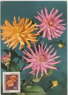 Carte Maximum Fleurs 1961 Dahlias 557 - DDR