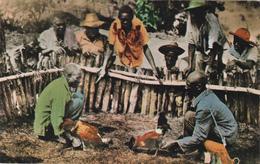 CPA HAÏTI Port Au Prince Batailleurs De Coqs Combat De Coqs Coutume Traditions - Cartes Postales