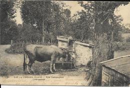 Cpa Vaches à L'abreuvoir En Limousin Et Garçonnet - Ohne Zuordnung