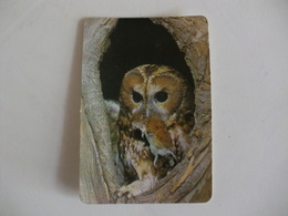 Owl  Portuguese Portugal Pocket Calendar 1993 - Small : 1991-00