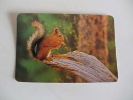 Squirrel Ecureuil Esquilo Portugal Portuguese Pocket Calendar 1993 - Calendriers