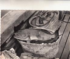Pesce Cernia E Pesca-Viaggiata-Bella Cartolina D'epoca Originale 100% - Pesci E Crostacei