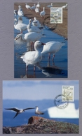 Greenland Grønland 1990 2 Maximum Cards 2 X Maximum Karte Birds Vögel Fauna - Collections, Lots & Series