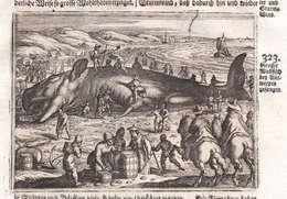 Grosser Wallfisch Bey Antwerpen Gefangen - Wal Whale Antwerpen Anvers Walfisch Kupferstich Antique Print - Prints & Engravings