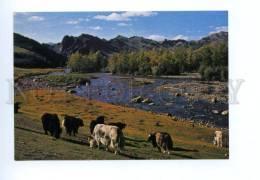 141698 MONGOLIA Zabhan Aimak Aymaq Bogdyn Gol River OLD PC - Mongolia