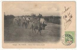 DAKAR - Retour D'un Troupeau Au Parc - MD 103 - 1906 - Sénégal