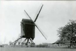 NIEL (Prov. Antwerpen) - Molen/moulin - Mooie Prentkaart Van De Verdwenen Houten Koekoekmolen (omstreeks 1920) - Niel