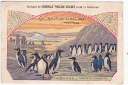 Chromo - Chocolat Poulain Orange - Excursion Dans Les Régions Polaires - Terre De Banks - Groupe De Pingoins - Poulain