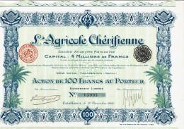 MAROC-AGRICOLE CHERIFIENNE. CASABLANCA. Action 1920 - Shareholdings