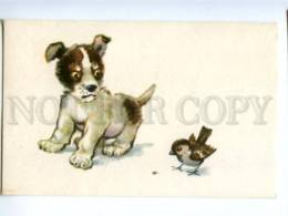 153329 ZOO CIRCUS Puppy & Sparrow Old Russian PC - Dogs