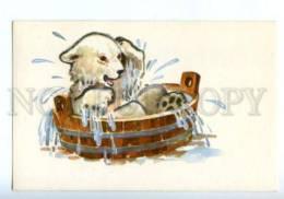153330 ZOO CIRCUS Bathing POLAR BEAR Old Russian PC - Bears