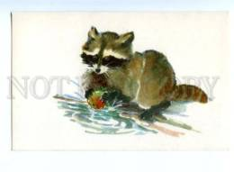 153332 ZOO CIRCUS Raccoon W/ Apple Old Russian PC - Other