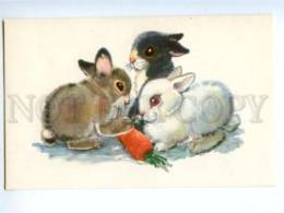 153333 ZOO CIRCUS Rabbits Old Russian PC - Other
