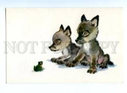 153336 ZOO CIRCUS Wolf FROG Old Russian PC - Other