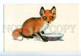 153338 ZOO CIRCUS Fox Old Russian PC - Other