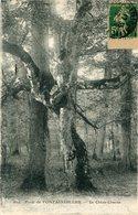 ARBRE(FONTAINEBLEAU) - Trees