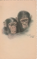 """"""" Madagascar Exposition Coloniale Internationale De Paris 1931 Couple De Chimpanzes 386G - Madagascar"""