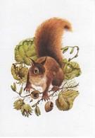 Leslie Anne IVORY Ecureuil Noisettes Carnet - Autres Illustrateurs