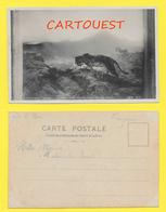 CPA Salon 1902 - Melle HILDA FAUVE GUETTANT UN CONVOI - TIGRE - Peintures & Tableaux
