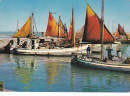 Postcard Fishing Boats / Fishermen  Riviera Adriatica Italia My Ref  B22612 - Fishing