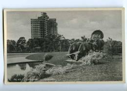 192213 Uruguay MONTOVIDEO La Carreta Vintage Photo Postcard - Uruguay