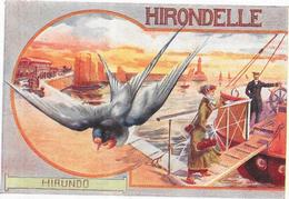 CHROMO CHICOREE Extra A LA BELLE JARDINIERE C BERIOT à LILLE - HIRONDELLE - BARA1 - - Other