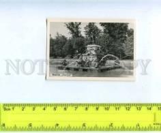 205986 RUSSIA PETRODVORETZ Photo Lenizokombinat 1961 Year - Rusland
