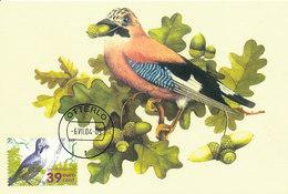 D33952 CARTE MAXIMUM CARD FD 2004 NETHERLANDS - EURASIAN JAY VLAAMSE GAAI GEAI CP ORIGINAL - Songbirds & Tree Dwellers