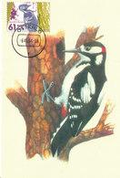 D33953 CARTE MAXIMUM CARD FD 2004 NETHERLANDS - WOODPECKER SPECHT CP ORIGINAL - Climbing Birds