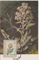 Bulgarie Carte Maximum Fleurs 1960 Gentianes 1018 - Briefe U. Dokumente