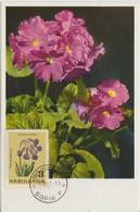 Bulgarie Carte Maximum Fleurs 1963 Primevères 1210 - Briefe U. Dokumente
