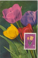 Bulgarie Carte Maximum Fleurs 1963 Tulipes 1212 - Briefe U. Dokumente