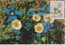 Bulgarie Carte Maximum Fleurs 1963 Clématites 1214 - Briefe U. Dokumente