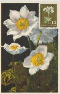 Bulgarie Carte Maximum Fleurs 1963 Anémones 1215 - Briefe U. Dokumente