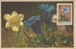 Bulgarie Carte Maximum Fleurs 1968 Gentiane 1584 - Briefe U. Dokumente