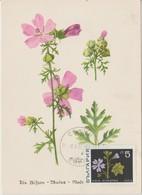 Bulgarie Carte Maximum Fleurs 1968 Mauve 1651 - Briefe U. Dokumente