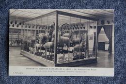 LYON - Museum Des Sciences Naturelles : Grande Vitrine De La Faune Régionale. - Lyon